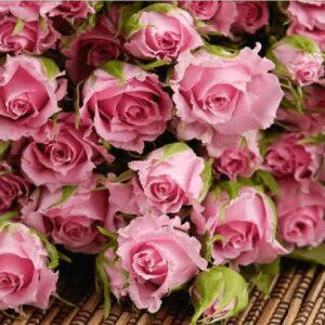 ורדים - יהלומים חלקי