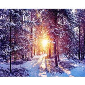 אור בקצה היער