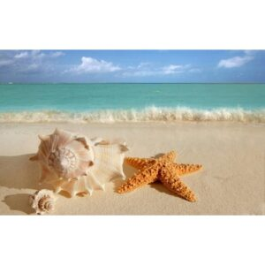 צדפה וכוכב ים