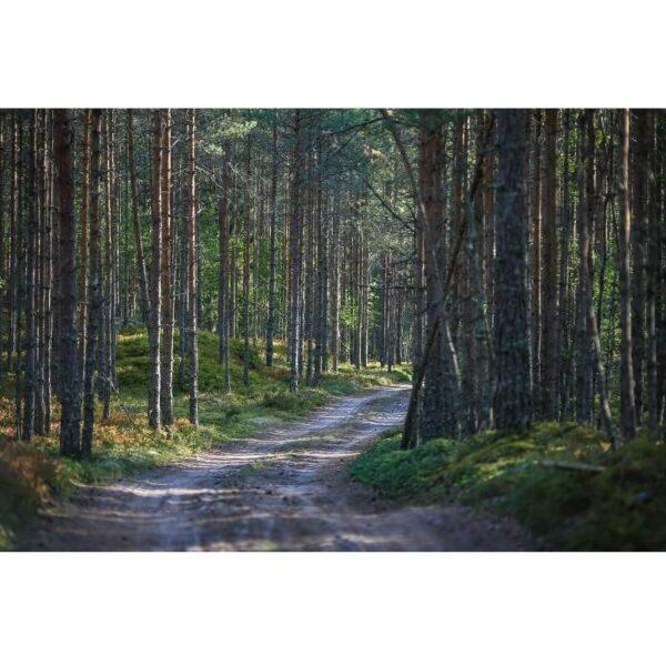 צביעת תמונה שביל ביער