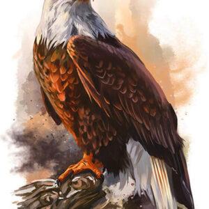צביעה לפי מספר מלך העופות