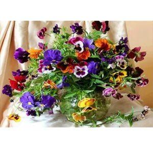 עציץ פרחים צבעוני