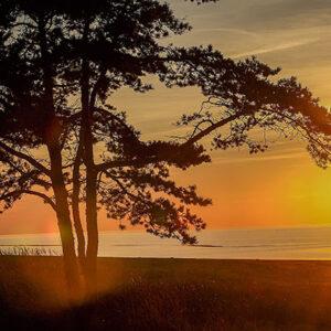 עץ ושקיעה בים יהלומים מרובעים