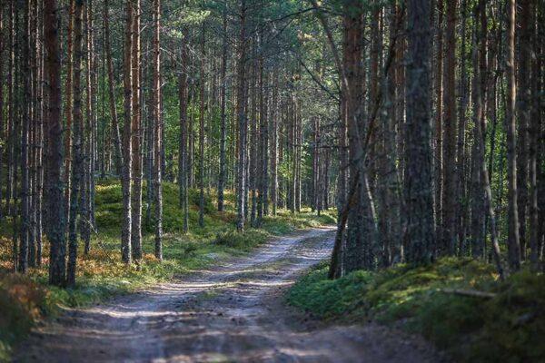 שביל ביער יהלומים מרובעים