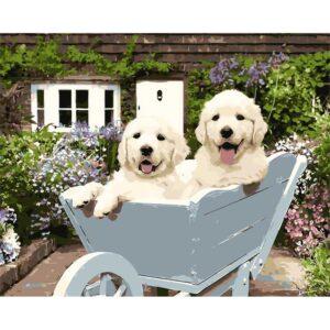 כלבים במריצה
